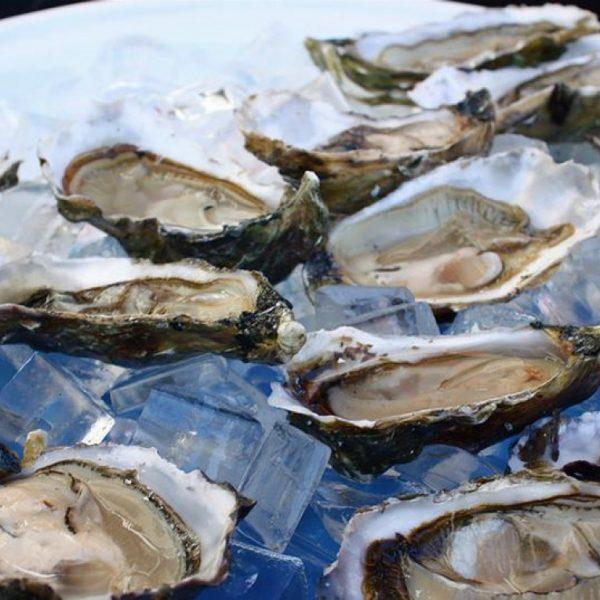 Taylor Martino Files Lawsuit Against AL Department Of Conservation On Behalf Of Local Oyster Farmers