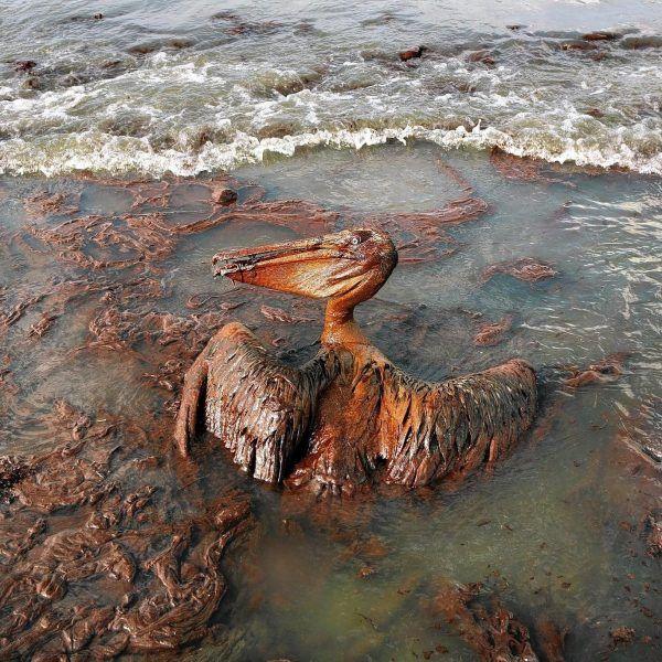 Gulf Oil Spill Lawsuit